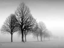 winter-trees-iii-by-ilona-wellmann-ab4938